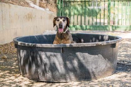La Lola fa il bagno  in piscina!!!La Lola si rinfresca!!!