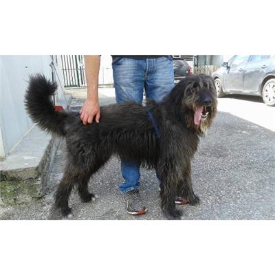 Comune della Spezia - 380260000464885