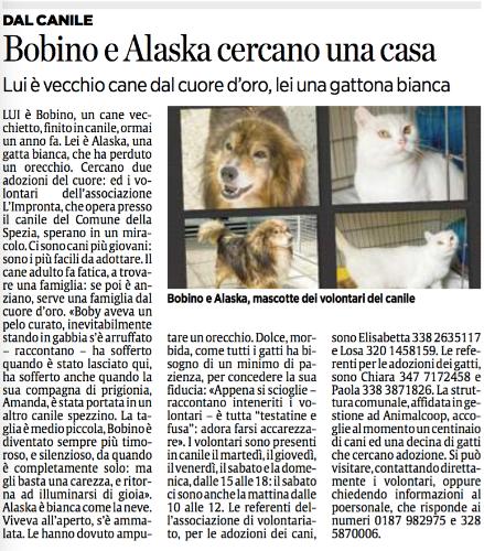 """BOBBY ED ALASKA SUL SECOLO XIX!!La storia di Bobby ed Alaska raccontata dalla giornalista Sondra Coggio. Per agevolare la lettura dell'articolo lo riportiamo qui sotto in maniera integrale: Lui è Bobino, un cane vecchietto, finito in canile, ormai un anno fa. Lei è Alaska, una gatta bianca, che ha perduto un orecchio. Cercano due adozioni del cuore: ed i volontari dell'associazione L'Impronta, che opera presso il canile del Comune della Spezia, sperano in un miracolo. Ci sono cani più giovani: sono i più facili da adottare. Il cane adulto fa fatica, a trovare una famiglia: se poi è anziano, serve una famiglia dal cuore d'oro. «Boby aveva un pelo curato, inevitabilmente stando in gabbia s'è arruffato – raccontano – ha sofferto quando è stato lasciato qui, ha sofferto anche quando la sua compagna di prigionia, Amanda, è stata portata in un altro canile spezzino. La taglia è medio piccola, Bobino è diventato sempre più timoroso, e silenzioso, da quando è completamente solo: ma gli basta una carezza, e ritorna ad illuminarsi di gioia». Alaska è bianca come la neve. Viveva all'aperto, s'è ammalata. Le hanno dovuto amputare un orecchio. Dolce, morbida, come tutti i gatti ha bisogno di un minimo di pazienza, per concedere la sua fiducia: «Appena si scioglie – raccontano inteneriti i volontari – è tutta """"testatine e fusa"""": adora farsi accarezzare». I volontari sono presenti in canile il martedì, il giovedì, il venerdì, il sabato e la domenica, dalle 15 alle 18: il sabato ci sono anche la mattina dalle 10 alle 12. Le referenti dell'associazione di volontariato, per le adozioni dei cani, sono Elisabetta 338 2635117 e Losa 320 1458159. Le referenti per le adozioni dei gatti, sono Chiara 347 7172458 e Paola 338 3871826. La struttura comunale, affidata in gestione ad Animalcoop, accoglie al momento un centinaio di cani ed una decina di gatti che cercano adozione. Si può visitare, contattando direttamente i volontari."""